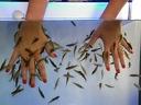 Fish SPA терапия с рибките Garra Rufa за ръце или крака само за 8,99 лв.
