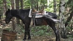 60-минутен урок по конна езда с инструктор (тръст и галоп) само за 20лв, от Конна база София - Юг