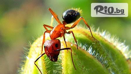 Масло от яйца на мравки Tala 20 ml за 15,90 лв. - премахни нежеланото окосмяване завинаги