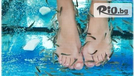 35 минути релаксиращ SPA fish масаж на крака за 12.90лв. от Doctor Fish ! Лукс за кожата!