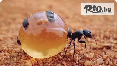Масло от яйца на мравки Tala 20 ml за 15,80 лв. - премахни нежеланото окосмяване завинаги!