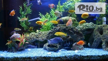 Морски аквариум Свети Никола