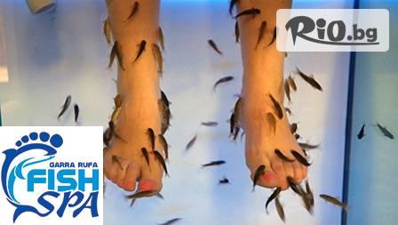 Релаксирай с уникалната Fish SPA терапия с рибките Garra Rufa за ръце или крака само за 8,99 лв. в отпускащата атмосфера на