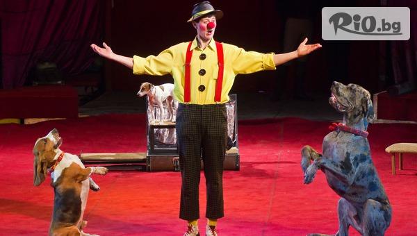 Цирк с дресура на животни #1