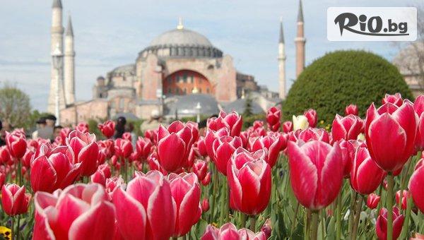 Фестивал на Лалето в Истанбул #1
