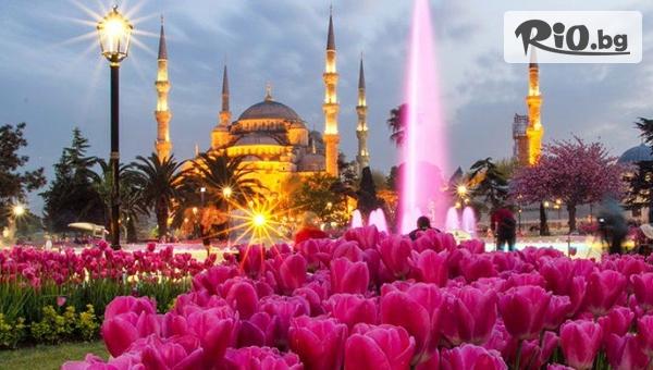 Фестивалa на лалето в Истанбул