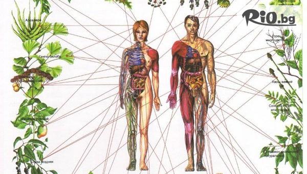 Биорезонанс - Сканиране на 250 органа и клетки с 50% отстъпка, от Зона Здраве