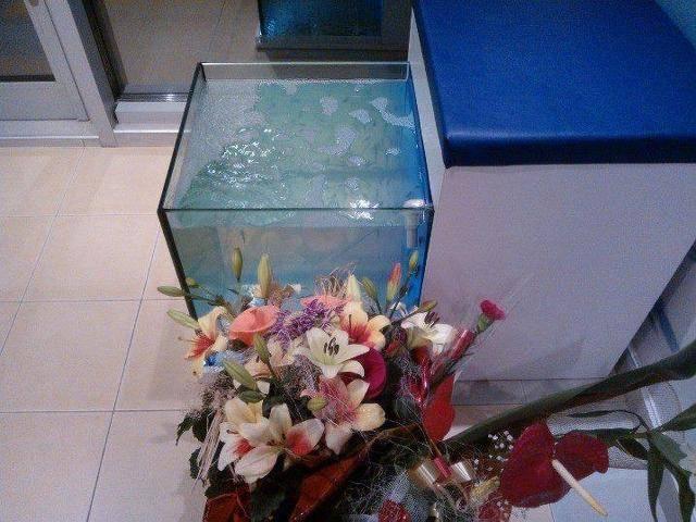 SPA Fish Галерия #2