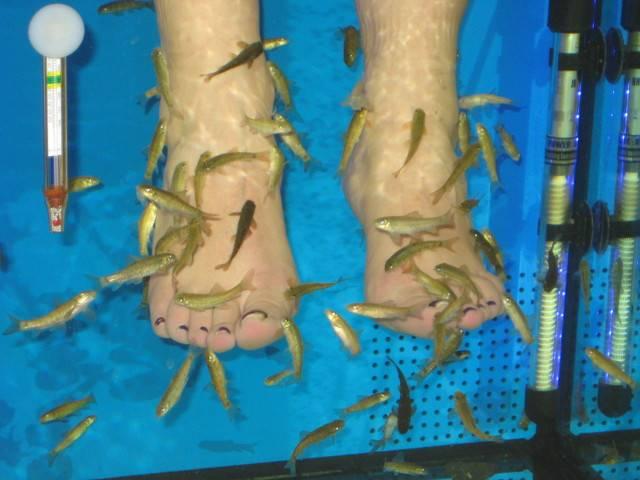 SPA Fish Галерия #7