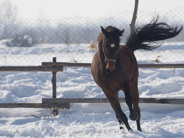 База за конна езда Галерия #11