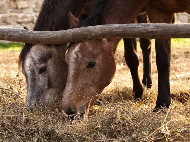 База за конна езда Галерия #8