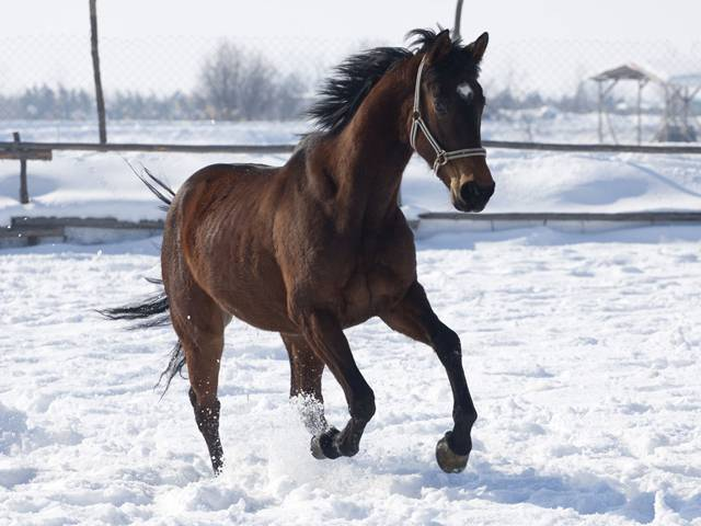 База за конна езда Галерия #12