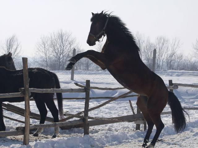 База за конна езда Галерия #10