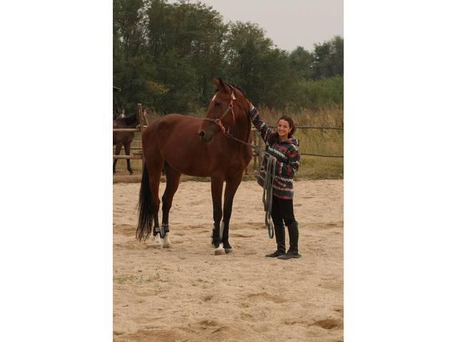 База за конна езда Галерия #2