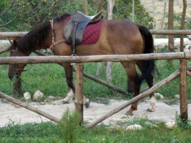 Механа и конна база Чифлика-с.Калиманци Галерия #6