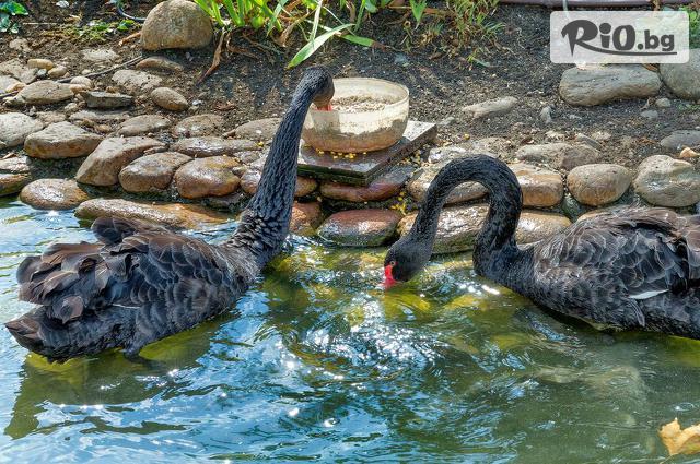 Cascadas Family Resort 3* Галерия #15